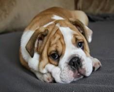 las-mascotas-pueden-contagiar-el-ebola1