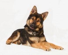 perro-detecta-cancer-de-tiroodes1