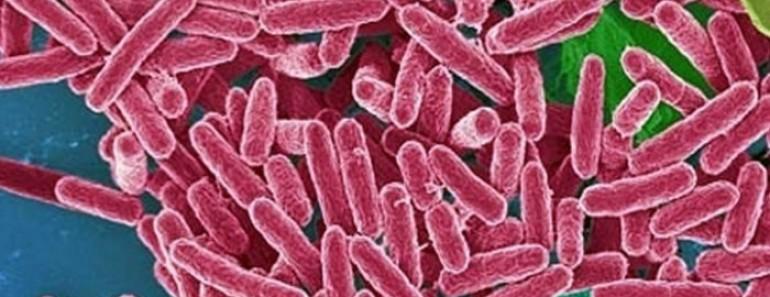 Las 12 bacterias más peligrosas para la salud