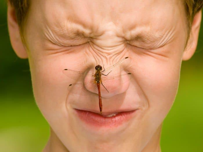 Prevenir la picadura de insectos