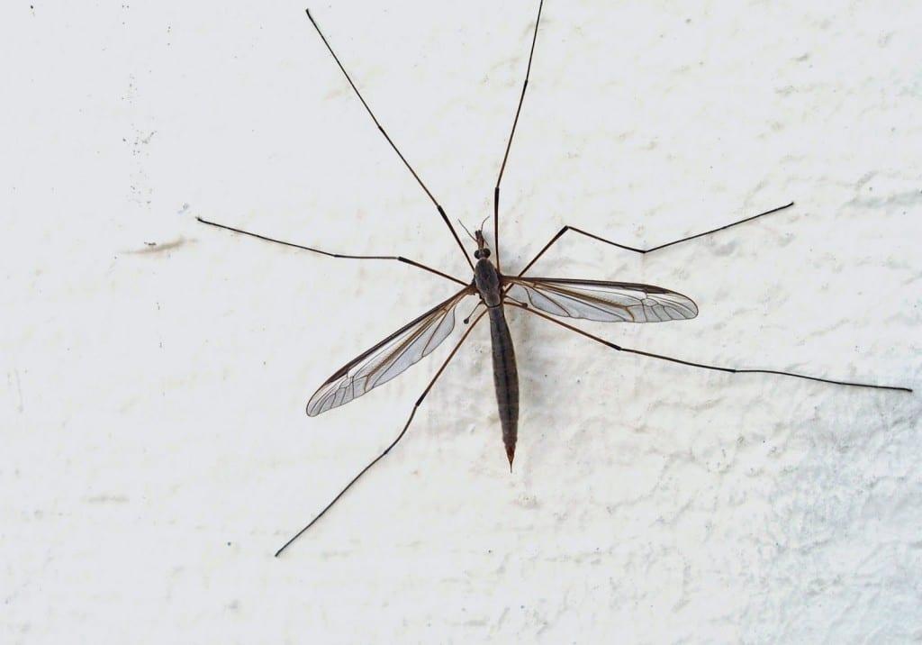 ¿Puedo usar repelente para mosquitos si estoy embarazada?
