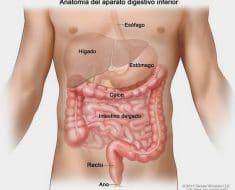 Qué es el colon