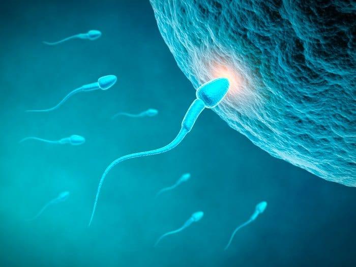 Cuándo se pueden escuchar los primeros latidos del corazón de un feto