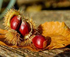 Beneficios para la salud de comer castañas