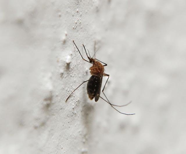 Cómo prevenir las picaduras de mosquitos