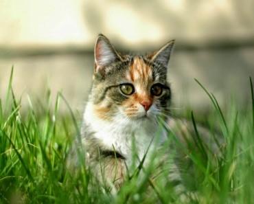 Parásito intestinal de los gatos como tratamiento para el cáncer