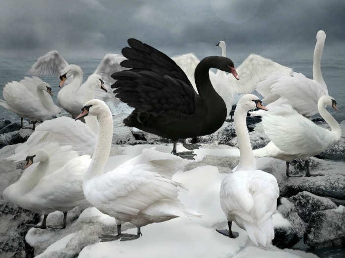 soñar con cisne