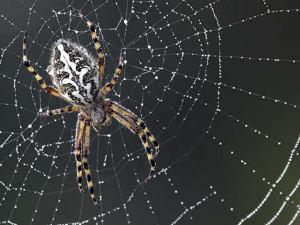 Significado de soñar con araña