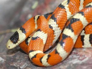 Significado de soñar con serpiente