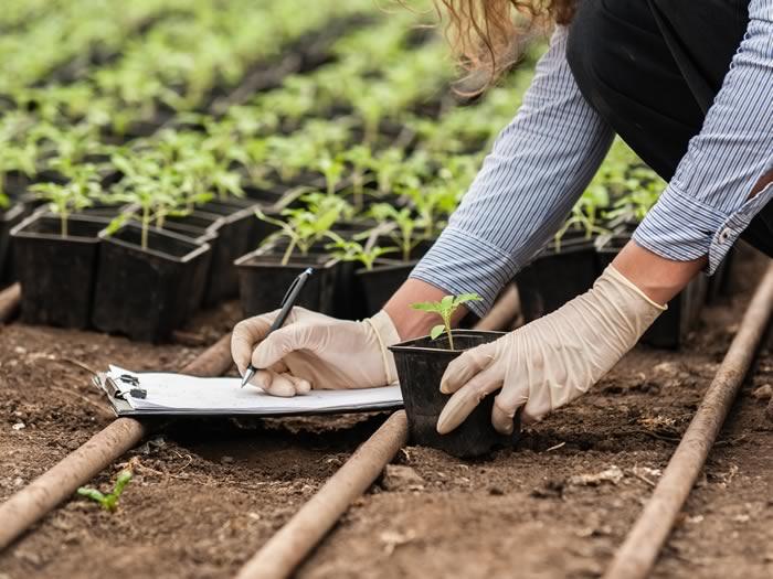 Avances tecnológicos que cambiarán el mundo: mejora cultivos