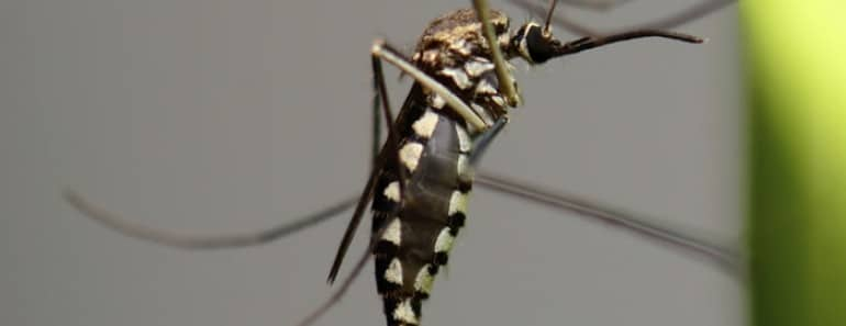Recubrimiento repelente de insectos