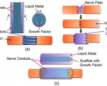 Reconectan con metal líquido los nervios seccionados