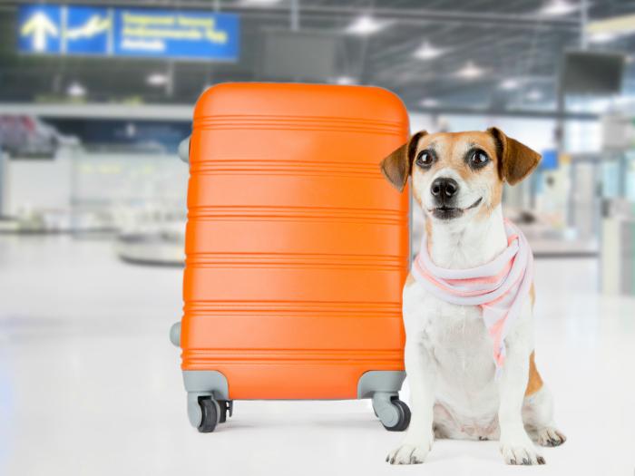 ¿Que debo plantearme al tomar la decisión de viajar con mi mascota?