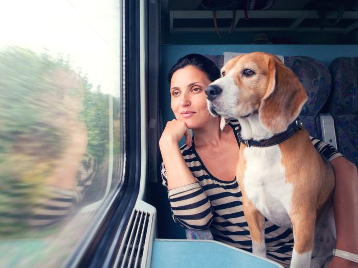 Resultado de imagen de perros en el tren