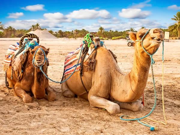 Viajar a Marruecos-Tafilat