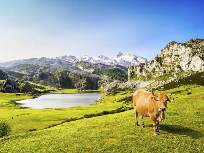Consejos visitar Asturias