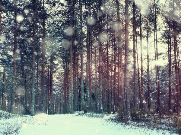 Destinos ideales para Navidad