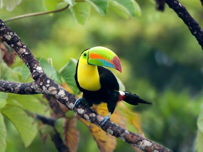 Aves de Panamá