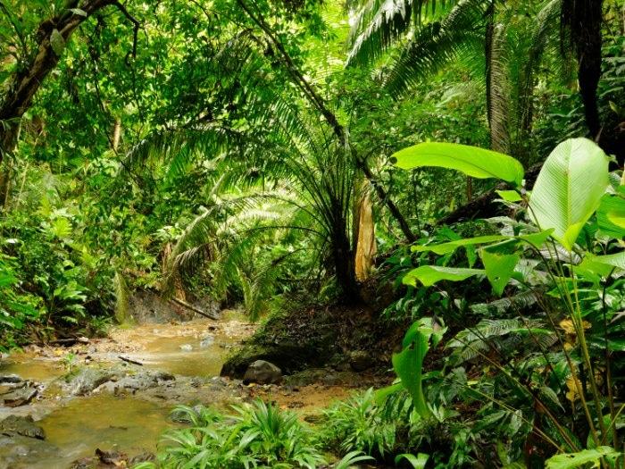 Selva de Panamá