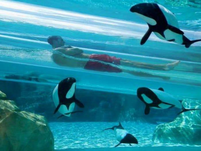 aquatica-orlando-parques-acuaticos