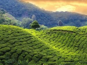 Descubre Sri Lanka