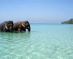 india-elefantes-743678