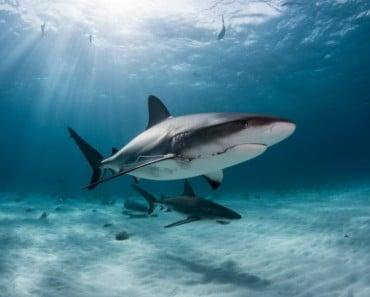 nadar-tiburones